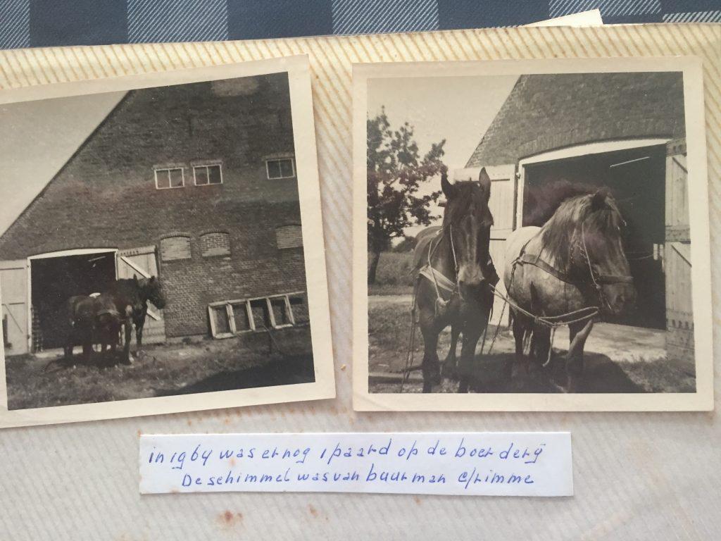 1964 Nog 1 paard op de boerderij